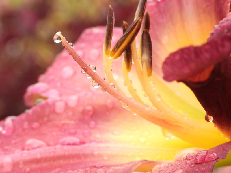 Nikon Coolpix P1000 image sample 7